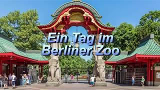 Download Zoo Berlin 2017 Video
