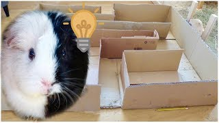 Download A Maze for the Guinea Pigs Video