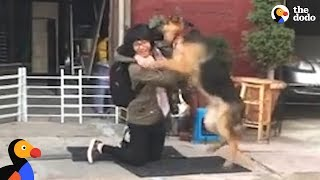 Download German Shepard Dog Reunited With Owner is SO EXCITED | The Dodo Video