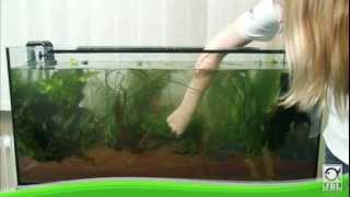 Download JBL - Aquarium einrichten Video