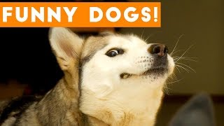Download Ultimate FUNNY DOG Compilation | Cute Pets 2017 Video