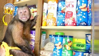 Download Monkey Raids The Snack Cabinet! Video