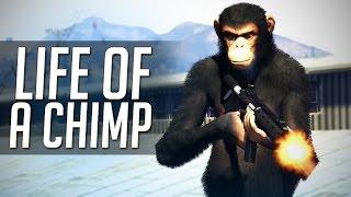 Download GTA 5 Mods: ″Life of a Chimp!″ (GTA V Movie) Video