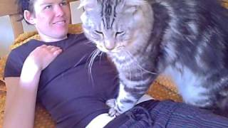 Download Maine Coon Luca Video