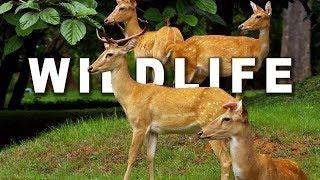 Download WILDLIFE IN 4K (ULTRA HD) 60fps Video