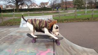 Download One dog and his skateboard Video