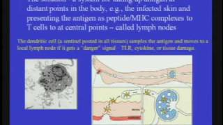 Download The Necessity of the Immune System Video