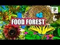 Download BOTANICAL PERMACULTURE FOOD FOREST Video