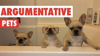 Download Argumentative Pets Video Compilation 2016 Video