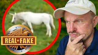 Download ARE UNICORNS REAL? + 4 more ″Real or Fake?″ Pictures Video