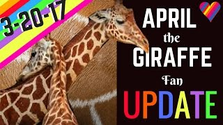 Download APRIL the GIRAFFE UPDATE 3-20-17: Labor Signs/Physical Changes! Birth is SO Near! Video