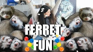 Download INSANE Ferret Fun! SPOILING My Cute Pet Ferrets Video