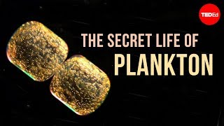 Download The Secret Life of Plankton Video