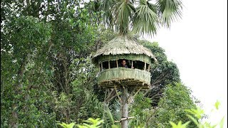 Download Build An AMazing Round Hut Around Palmyra Palm Tree - Round House Making By Smart Village Boys Video