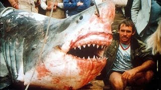 Download 11 Giant Sharks Caught Video
