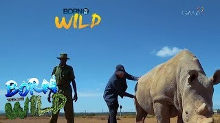 Download Born to Be Wild: Could science save Najin and Fatu from extinction? Video