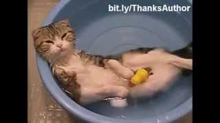 Download suyu seven kedilerr Video