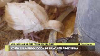 Download Producción de pavos 2 Video