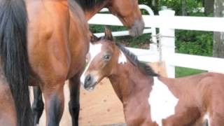 Download Amaryllis Farm - Horse Slaughter Lies Exposed: PART 2/2 *NOT GORY* Video