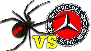 Download Scary Redback Spider Vs Mercedes Benz You Won't Believe What I Caught! Video
