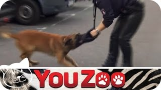 Download Hunde-streife im Einsatz - Sabrina │YouZoo Video
