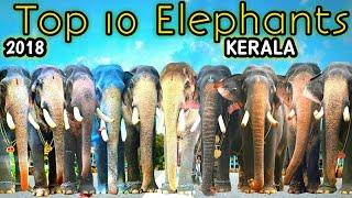Download Top 10 Elephants in Kerala || 2018 || Kerala Elephant Video