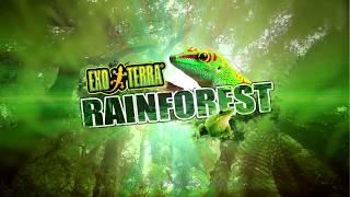 Download Exo Terra Rainforest Video