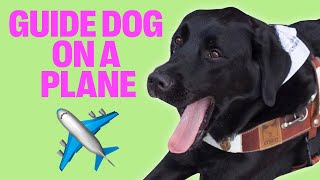 Download BRINGING A BIG GUIDE DOG ON AN AIRPLANE! Video