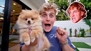 Download I STOLE MY BROTHERS PUPPY **PRANK WARS** (HE FREAKED OUT) Video