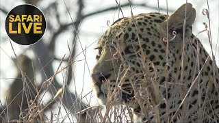 Download safariLIVE- Sunrise Safari - September 30, 2018 Video