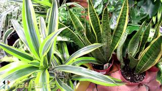 Download House Plants (Indoor) at Home Depot Video