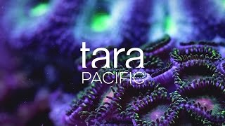 Download Tara Pacific 2016-2018 Expedition Video