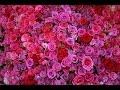 Download Học tiếng Nga qua bài hát - Triệu đóa hoa hồng - Миллион Алых Роз Video