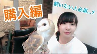Download 【ざっとお話し】フクロウについて~購入編~ Video