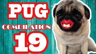 Download Pug Compilation 19 - Funny Dogs but only Pug Videos | Instapugs Video