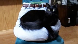 Download 5 Crafts Fur Cat Owners Video