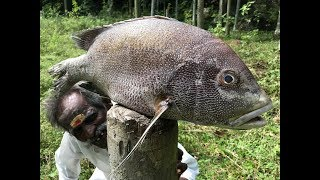 Download PEARL SPOT FISH fry prepared by my Daddy ARUMUGAM / BIG Full FISH Fry / Village food factory Video