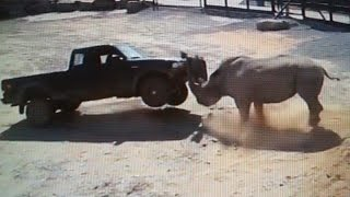 Download RHINO ATTACKING (( TRUCKS , BUSES , ANIMALS AND HUMANS )) PART 1 Video
