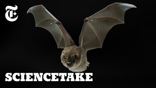 Download Secrets of the Bat Wing | ScienceTake Video