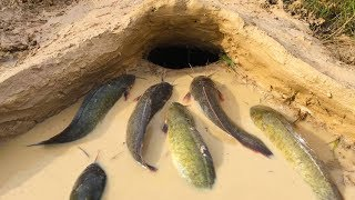 Download Amazing Muddy soil Hole Trap - Smart Man Build Fish Trap By Muddy soil- Get Alot of Fish 100% Video