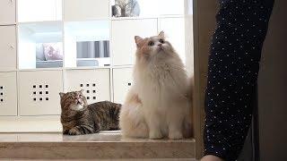 Download 집에 찾아온 낯선 사람을 만난 고양이들 Video