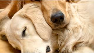Download Pet Therapy: Sleep Music for Dogs and Cats Video