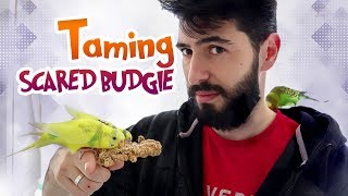 Download How to Bond and Tame a Scared Budgie | Vlog ## Video