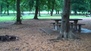 Download Dog Park Amenities Ideas for Conway Video