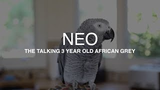 Download ″Neo″ the African Grey talking up a storm - Best parrot talking video ever Video