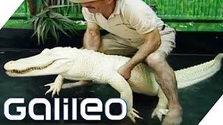 Download Wie gefährlich ist das Albino Krokodil? | Galileo | ProSieben Video