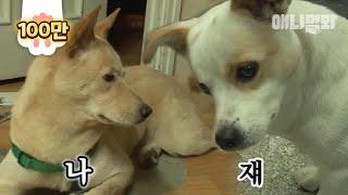 Download 나는 우리 집 개가 맞고, 쟤는 아니다. l Stray Dog Acts Like A Pet Dog In Random Houses Video