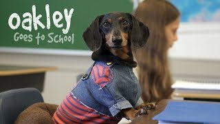 Download Ep 10: OAKLEY GOES TO SCHOOL - Cute Dog Video School Day Video