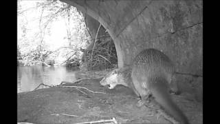 Download Otter Trail Camera Footage Video