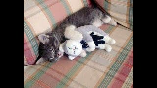 Download PROOF THAT CATS ARE THE BEST!!! - Cats That Like Hugs Compilation Video